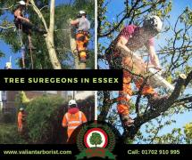 TREE SURGEON ESSEX | Essex's Leading Tree Surgeons